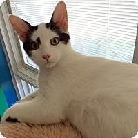 Adopt A Pet :: Tagg - Topeka, KS
