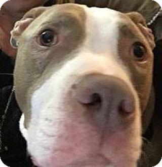 Terrier (Unknown Type, Medium) Mix Dog for adoption in Jerseyville, Illinois - Syd