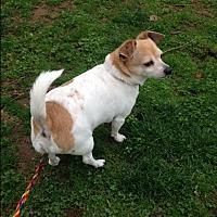 Adopt A Pet :: ROCKY - Cleveland, TN