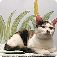 Adopt A Pet :: Clover - Manchester, CT