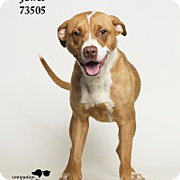 Adopt A Pet :: Jewel - Baton Rouge, LA