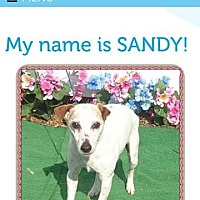 Adopt A Pet :: Sandy/GA - Columbia, TN