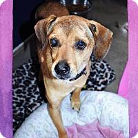 Adopt A Pet :: Donnie - San Jacinto, CA