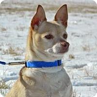 Adopt A Pet :: Baby - Cheyenne, WY
