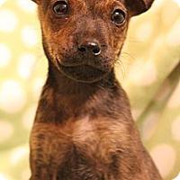 Adopt A Pet :: Lucy - Wytheville, VA