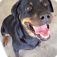 Adopt A Pet :: Missy - Calgary, AB