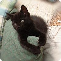 Adopt A Pet :: Mars - Arlington, VA