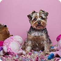 Adopt A Pet :: Lovie - Baton Rouge, LA