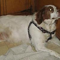 Adopt A Pet :: TN/Bailey - Mount Dora, FL