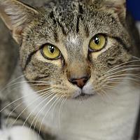 Adopt A Pet :: Dempsey170404 - Atlanta, GA
