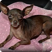 Adopt A Pet :: Georgia Brown - Granbury, TX