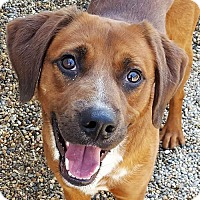 Adopt A Pet :: Buster - Bloomington, IL