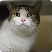 Adopt A Pet :: Faith - Bradenton, FL