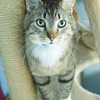 Adopt A Pet :: Boone - Evansville, IN
