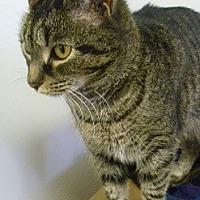 Adopt A Pet :: Ezzy - Hamburg, NY