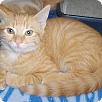 Adopt A Pet :: Reggie - Richmond, VA