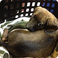 Adopt A Pet :: April - Stilwell, OK