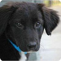 Adopt A Pet :: Brandon - Denver, CO
