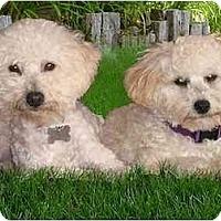 Adopt A Pet :: Missy &  Robbie - La Costa, CA