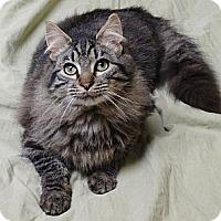 Adopt A Pet :: Joe - Arriving 1/19 - East Hanover, NJ