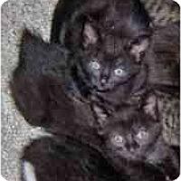 Adopt A Pet :: Chiara and Dani - Boston, MA