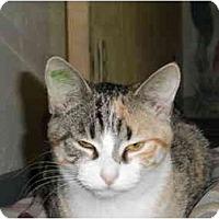Adopt A Pet :: Daphne - Milwaukee, WI