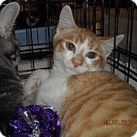 Adopt A Pet :: Buttons - Riverside, RI