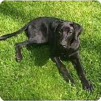 Adopt A Pet :: Meg - Cumming, GA