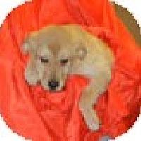 Adopt A Pet :: Galliano - Antioch, IL