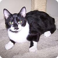 Adopt A Pet :: K-Kim2-Bacall - Colorado Springs, CO