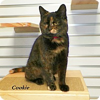 Adopt A Pet :: Cookie - Dover, OH