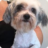 Adopt A Pet :: Bebe - St. Petersburg, FL