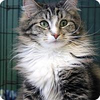 Adopt A Pet :: Twiggy - Paris, ME