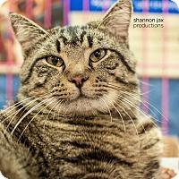 Adopt A Pet :: Splash - Gainesville, FL