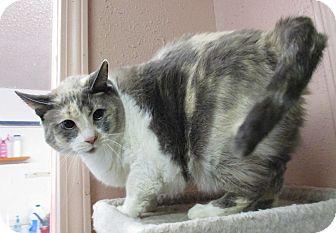 Calico Cat for adoption in Reeds Spring, Missouri - Sissi