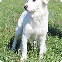 Adopt A Pet :: Dierks Bentley - Glastonbury, CT