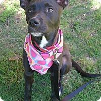 Adopt A Pet :: Nugget Girl - Helena, AL
