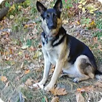 Adopt A Pet :: Lark (Fostered in Vermont) - Greeneville, TN