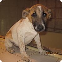Adopt A Pet :: ROBBIE - La Mesa, CA