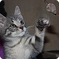 Adopt A Pet :: Pixy (LE) - Little Falls, NJ