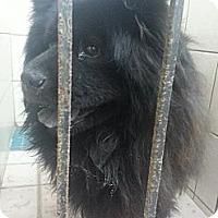 Adopt A Pet :: Yuka - Tillsonburg, ON