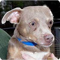 Adopt A Pet :: Cairo - Georgetown, KY