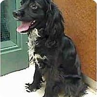 Adopt A Pet :: Marko - FOSTER NEEDED - Seattle, WA