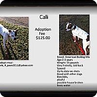 Adopt A Pet :: Cali - Crowley, LA
