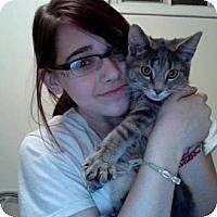 Adopt A Pet :: Winston - Richfield, OH