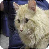 Adopt A Pet :: Rhys - Phoenix, AZ