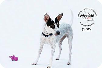 Jindo Mix Dog for adoption in Sherman Oaks, California - Glory