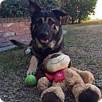Adopt A Pet :: DEAN - Van Nuys, CA