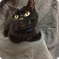 Adopt A Pet :: Graham - University Park, IL