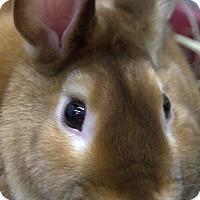 Adopt A Pet :: ENCHILADA - Boston, MA